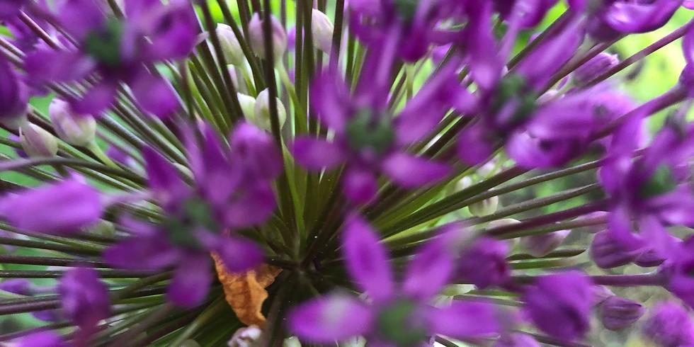 Open tuin weekend mei