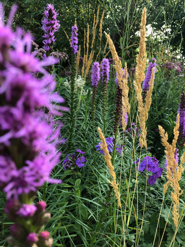 Grassen border met paarse accenten