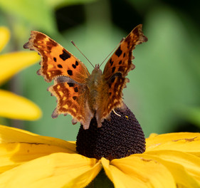 Vlinder close up De Couwenhof