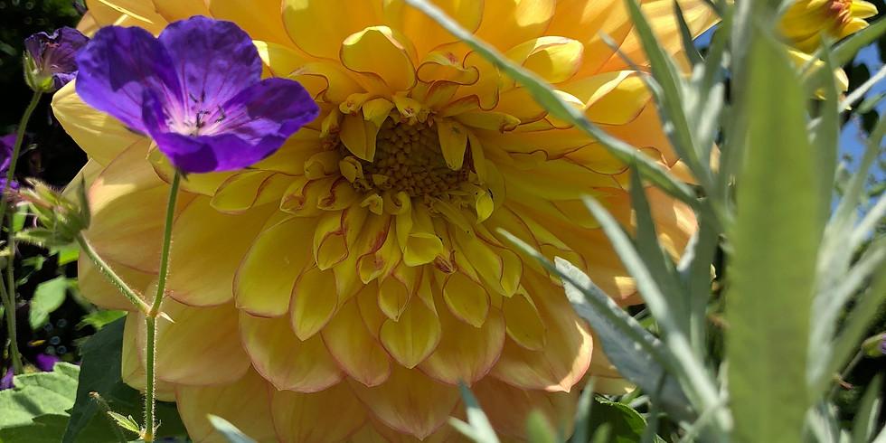 Open tuin weekend september
