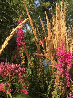 Natuurlijke grassen border