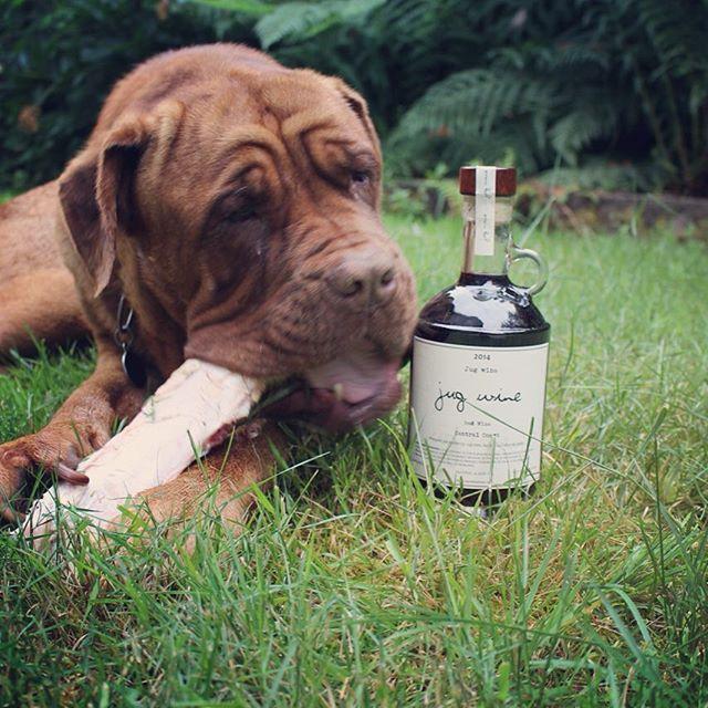 Beau with Jug Wine