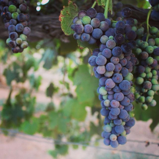 Verasion at Pianetta Winery