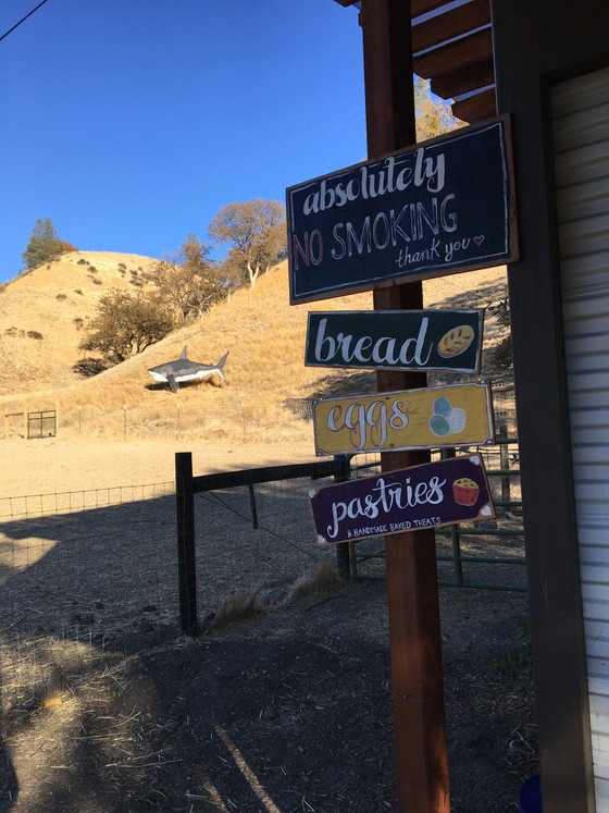 Vicarious Ranch & Farmstand….. and the shark on the side of the hill