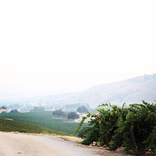 Smoke in the Vineyard