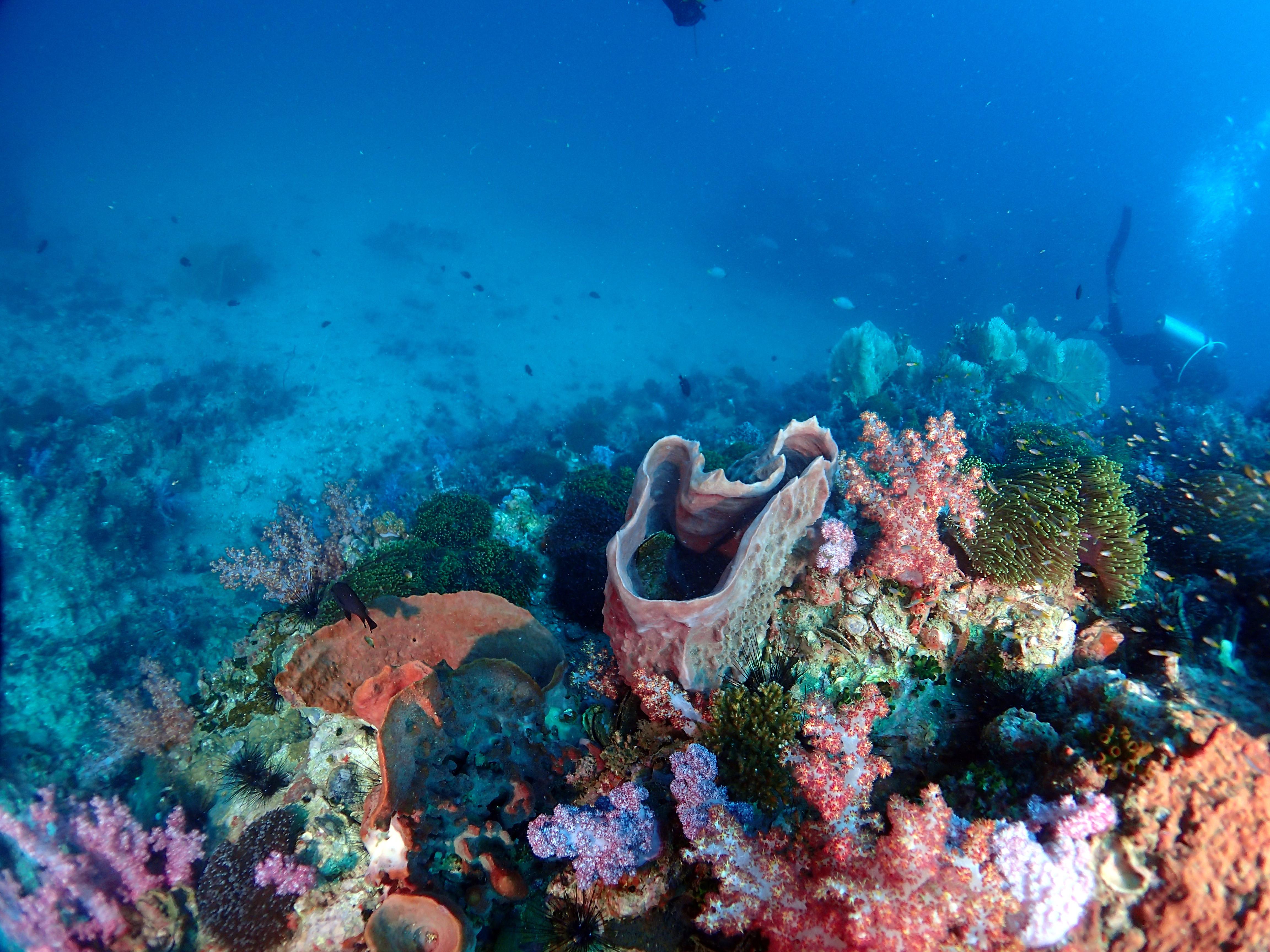 Phi Phi 3 Dives