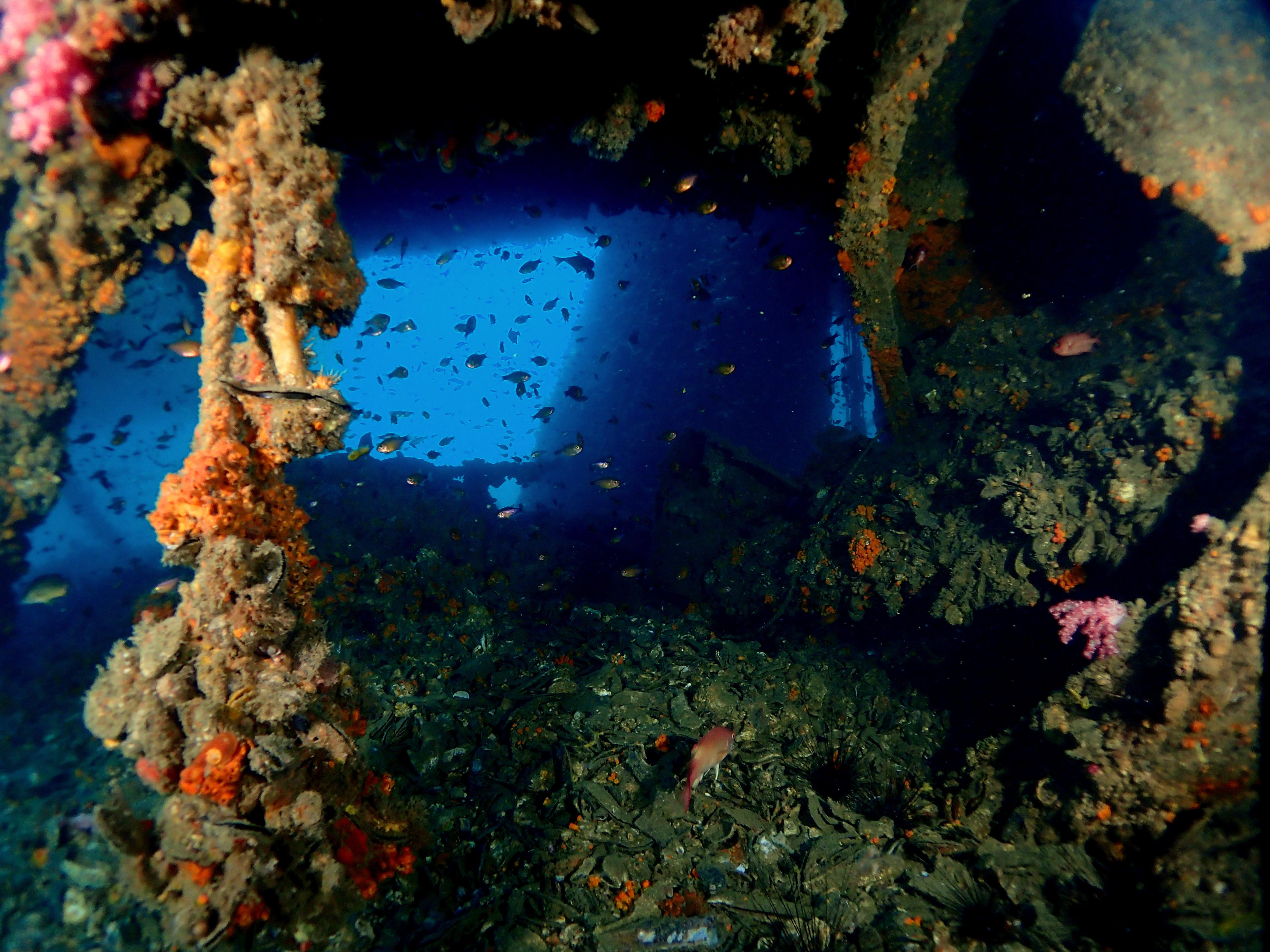 King Cruiser 2 Dives