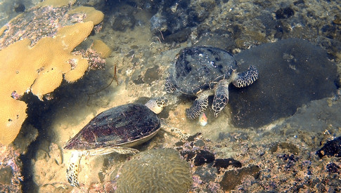 Phi Phi Lei - Turtle Rock