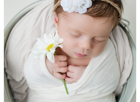 Arbor | Newborn Session | Hayley Gibbs Photography