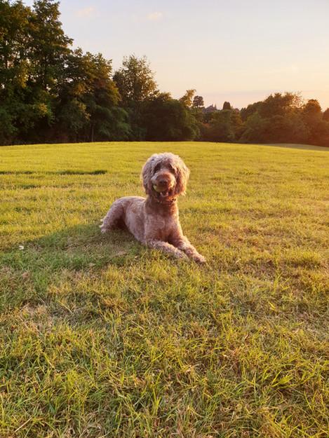 Therapy Dog - Worzel