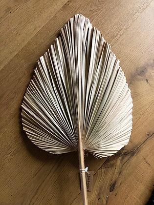 Large dried decorative leaf