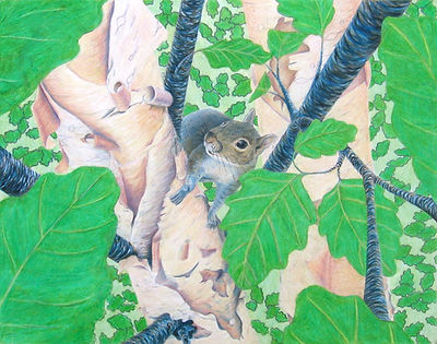 grey squirrel gray river birch leaves colored pencil