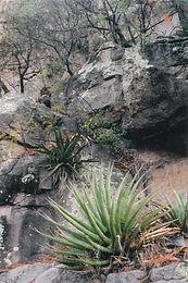 rocks Cliff Agave Chiricahua National Monument Arizona madrean sky islands
