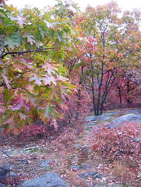 Fall in the Quarry, Green Hill Park, Worcester, Massachusetts granite