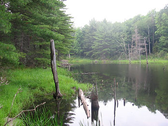Wells State Park Massachusetts water pond wetland swamp