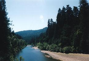 Redwood Forest Californa