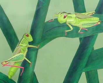 grasshopper, colored pencil, wax pastel colored paper