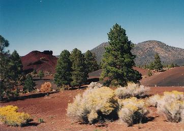 Crazy Colors, Sunset Crater Volcano National Monument, Arizona, cider, eruption, ponderosa pine