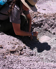 Ranger Uncovering Buried Fossil, Petrified Forest National Park, Arizona
