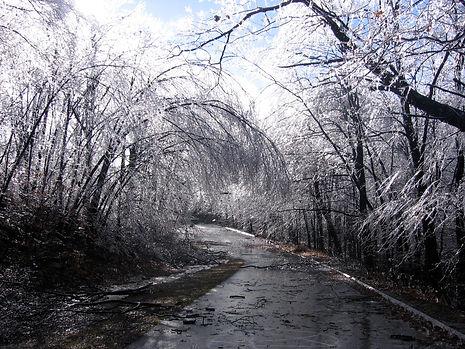 ice storm Bent Not Broken, Green Hill Park, Worcester, Massachusetts