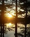 Sunrise Myles Standish State Forest, Massachusetts