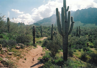 saguaro ocotillo nopal Spring View of Superstition Mountain and Lost Dutchmen State Park from Tonto National Forest