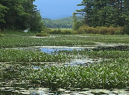 Greenfield State Park, New Hampshire