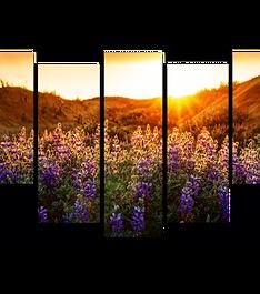 «Рассвет над лавандовым полем»