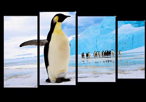 «Стая пингвинов»