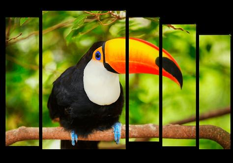 «Яркая птица»