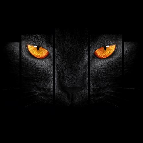 «Глаза ночи»