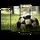 Thumbnail: «Мяч на траве»