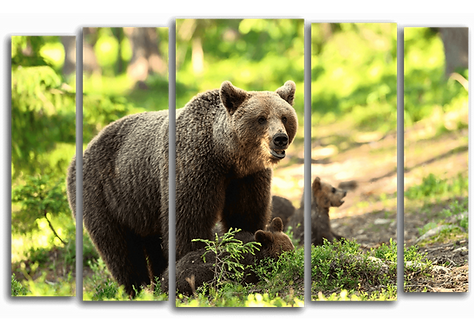 «Медведи в лесу»