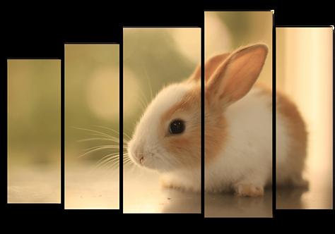 «Маленький кролик»