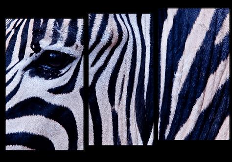 «Взгляд зебры»
