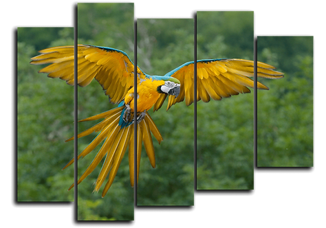 «Сине-желтый ара»