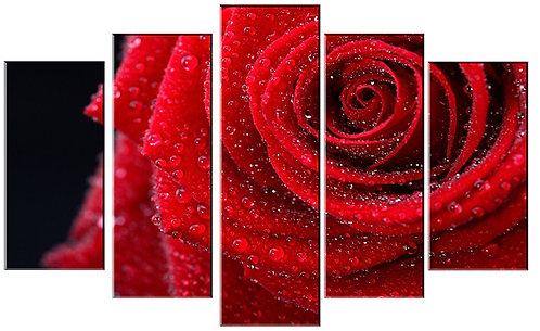 «Красная роза в каплях росы»