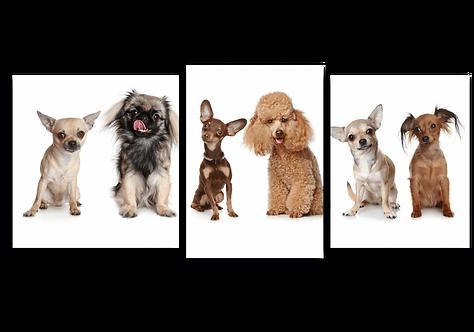 «Маленькие собачки»