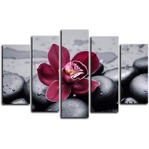 «Орхидея на камнях»