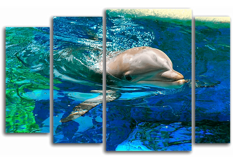 «Игривый дельфиненок»