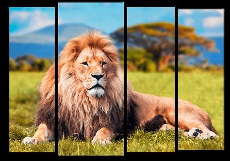 «Царь зверей на отдыхе»