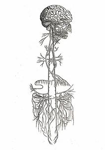 nerve-image-1.webp