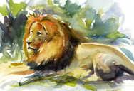 lion watercolour.jpg