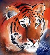 tiger watercolour.jpg