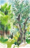 olive treelow.jpg