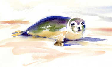 seal watercolour.jpg