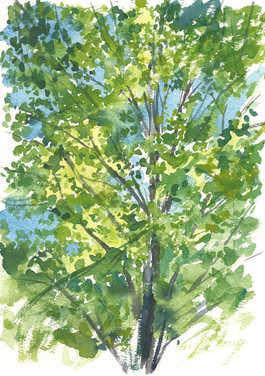 karens treeslow.jpg