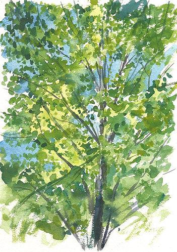 KAREN'S TREES