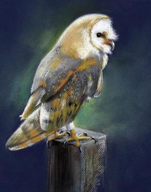 barn owl pastel.jpg