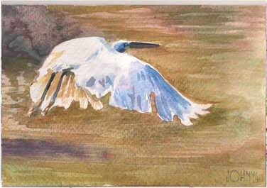 Egret 4.jpg